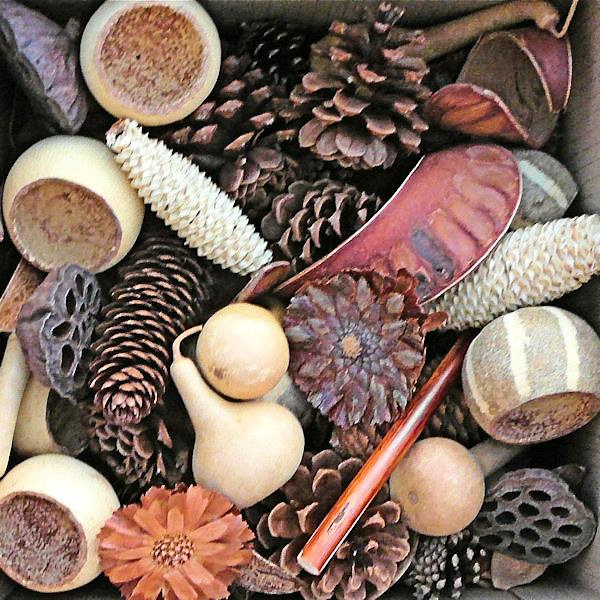 Box of 50, assorted pine cones, lotus pods, bell cups, gourds variety of sizes & natural colors, -- Case of 300 pine cones