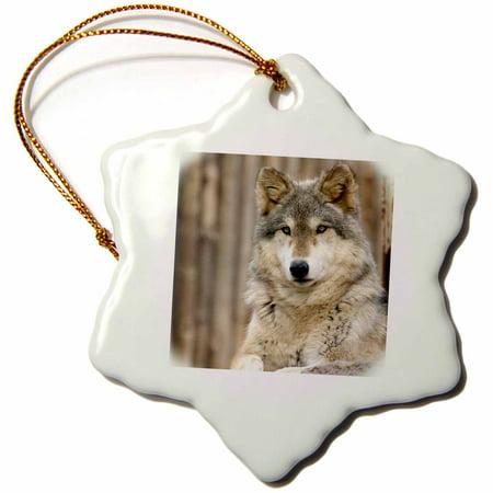 3dRose Gray Wolf, Folsom City Zoo, California - US05 TAU0105 - Tananarive Aubert - Snowflake Ornament, 3-inch ()