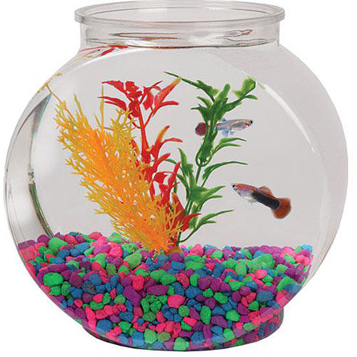 Aquarius 1-Gallon Fish Bowl