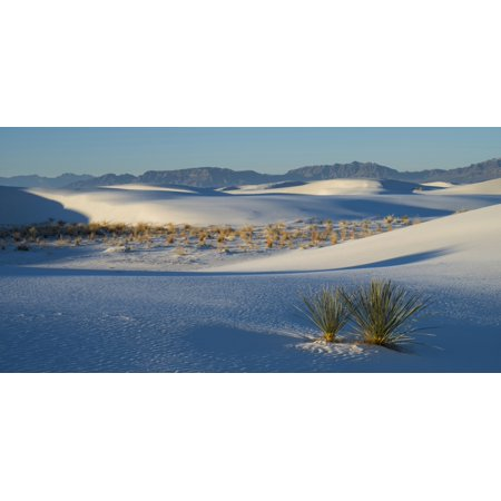 Sand Dunes And Yuccas At White Sands National Monument New Mexico Usa Poster Print