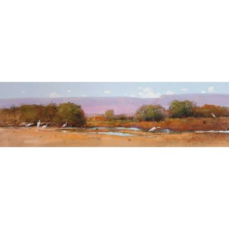 White Cattle Egrets Stretched Canvas - Tom Perkinson (12 x 36)