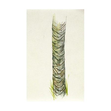 Botany, Arecaceae or Palmae, Palm Trunk Print Wall Art ()