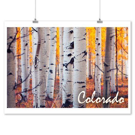 Colorado - Aspen Trees - Fall Colors - Lantern Press Photography (9x12 Art Print, Wall Decor Travel Poster)