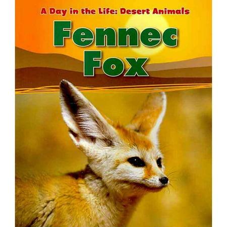 Fennec fox - Pagina da colorare fennec fox ...