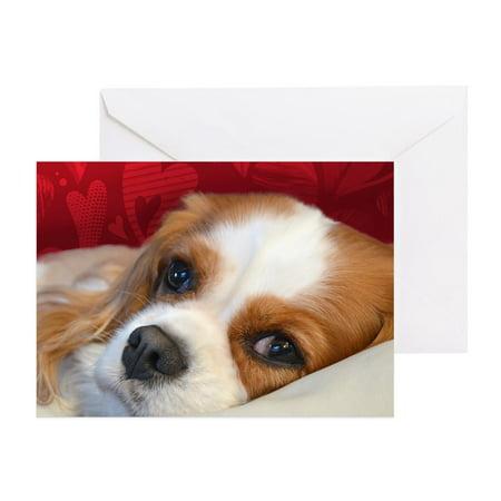 CafePress - Blenheim Cavalier King Charles Spani - Greeting Card, Blank Inside Glossy