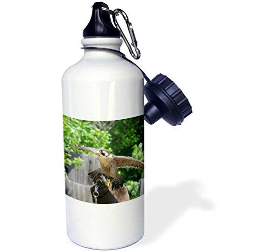 3dRose wb_24976_1 Peregrine Falcon Sports Water Bottle, 21 oz, White - image 1 de 1