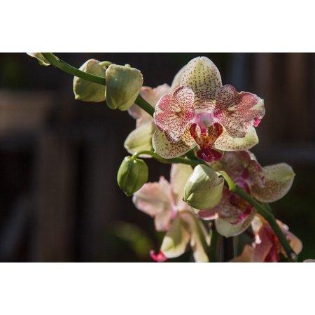 Canvas Print Flourished Nature Orchid Macro Flower Plant Stretched Canvas 10 x (Flourish Potassium Plant)