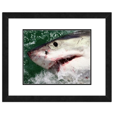 - Great White Shark Framed Photo by Photo File