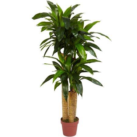4' Corn Stalk Dracaena Silk Plant