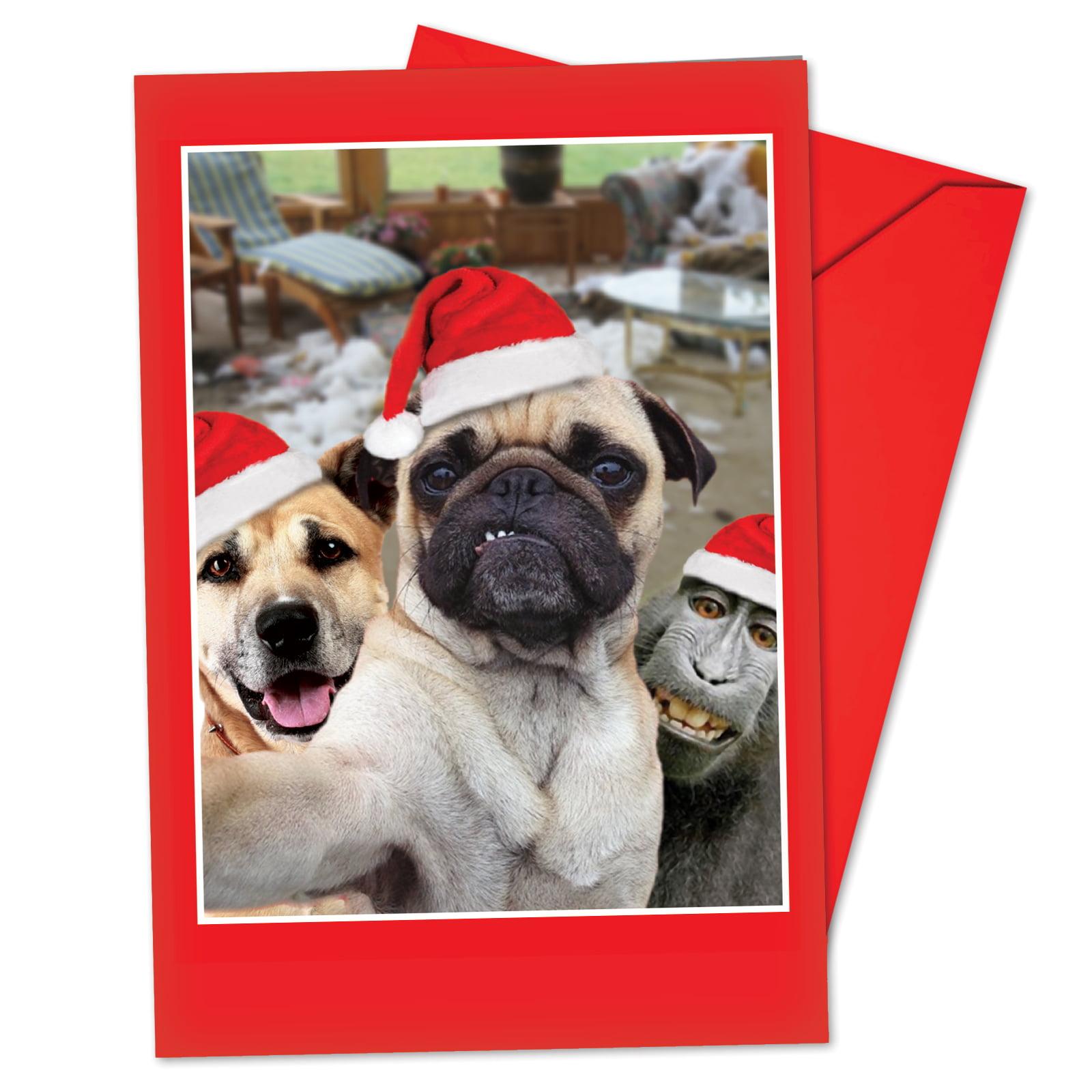 B2373DXSG Box Set of 12 Holiday Animal Selfie Christmas Cards w/ Envelopes, NobleWorks