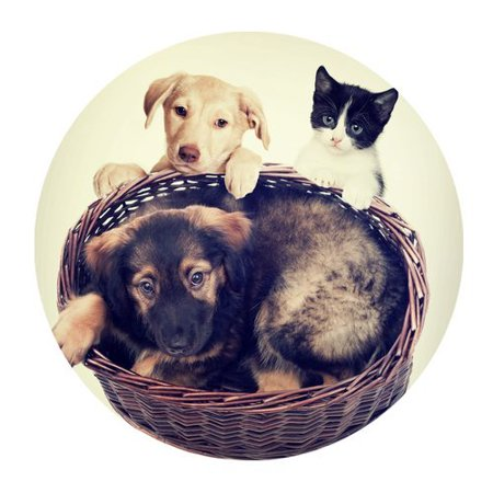 MKHERT Puppy in A Basket And Kitten Round Mousepad Mat For Mouse Mice Size 7.87x7.87 inches](Mickey Mouse Halloween Basket)