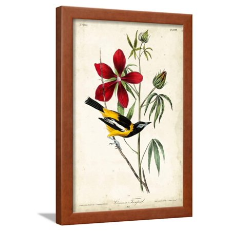 Audubon Bird Botanical I Framed Print Wall Art By John James