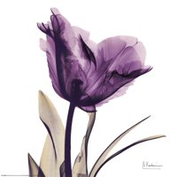 Royal Purple Parrot Tulip Art Print  By Albert Koetsier