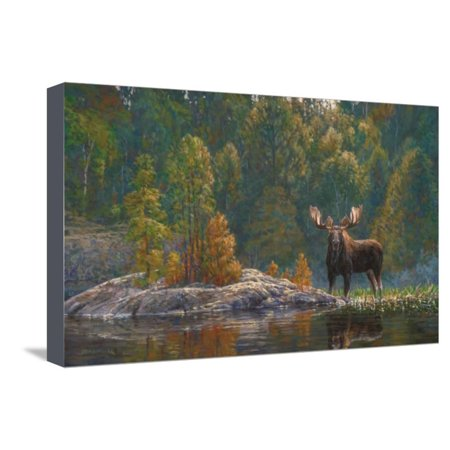 North Country Moose Stretched Canvas Print Wall Art By Bruce -