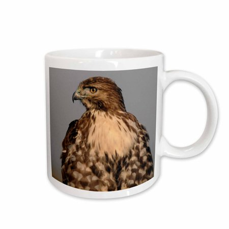 3dRose Red tailed Hawk, posing, Ridgefield NWR, Ridgefield, Washington, USA - Ceramic Mug, 15-ounce