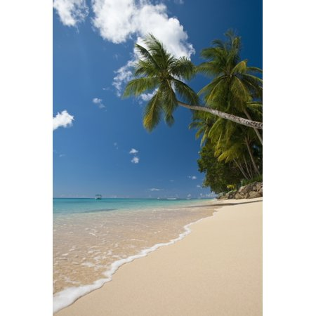 (Barbados Palm tree leaning over beach near Holetown Canvas Art - Ian Cumming  Design Pics (12 x 19))
