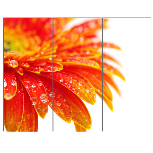 Design Art 'Orange Gerbera with Raindrops' 3 Piece Photographic Print on Wrapped Canvas Set
