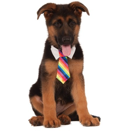 Clown Costume For Dogs (Formal Circus Clown Rainbow Tie Pet Collar Dog Costume)