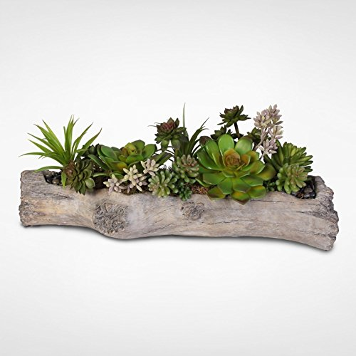 Succulents with Natural Rocks in a Cement Log