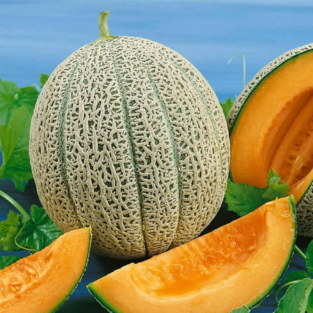 Cantaloupe Melon Garden Seeds - Hales Best Jumbo - 5 Lb Bulk - Non-GMO, Heirloom, Vegetable Gardening Seeds - (Best Way To Preserve Seeds)