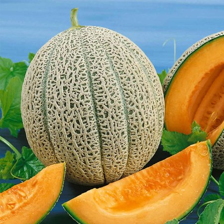 Cantaloupe Melon Garden Seeds - Hales Best Jumbo - 5 Lb Bulk - Non-GMO, Heirloom, Vegetable Gardening Seeds -