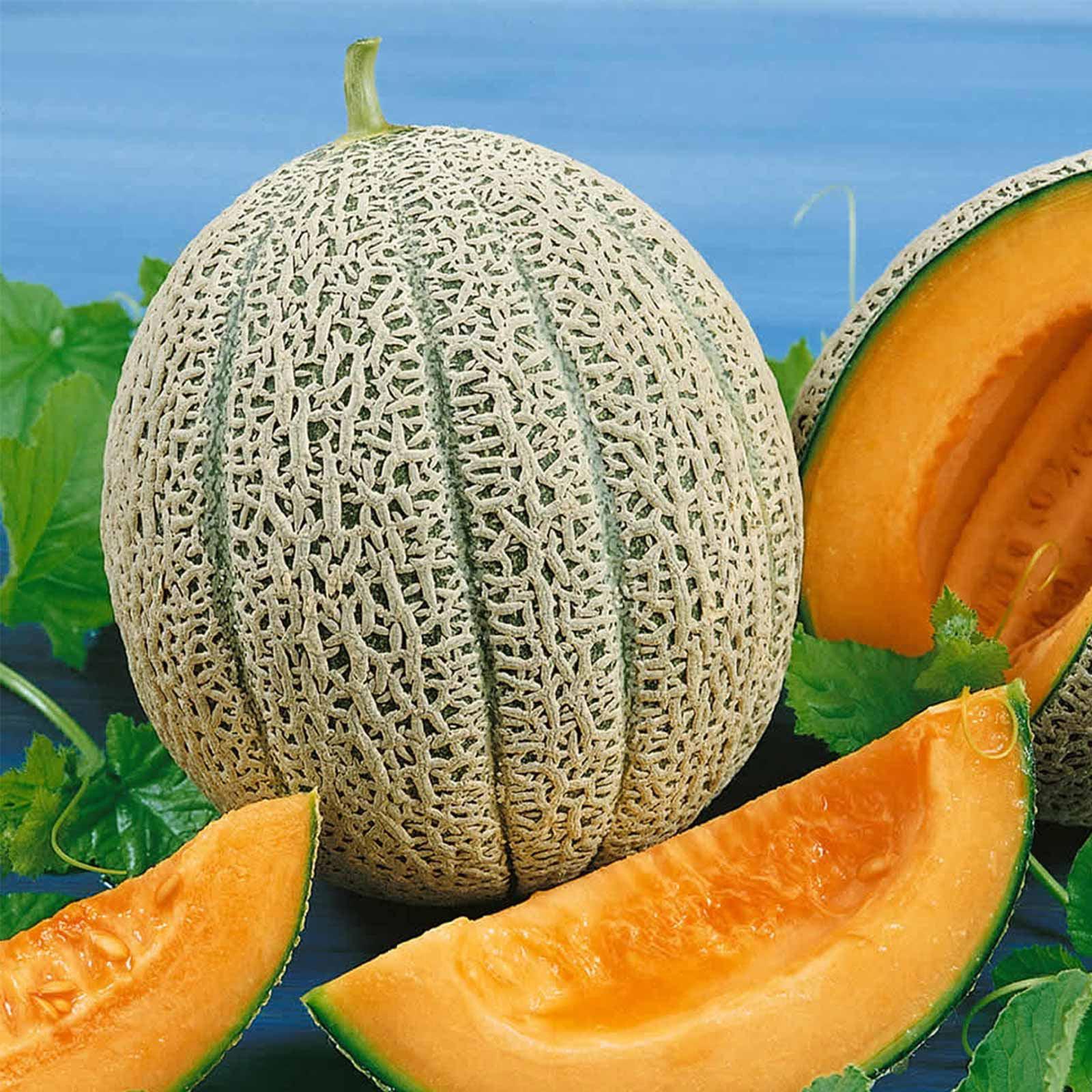 Cantaloupe Melon Garden Seeds - Hales Best Jumbo - 5 Lb Bulk - Non-GMO, Heirloom, Vegetable Gardening Seeds - Fruit