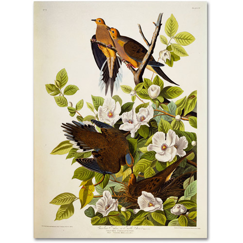 "Trademark Fine Art ""Carolina Turtledove"" Canvas Art by John James Audubon"