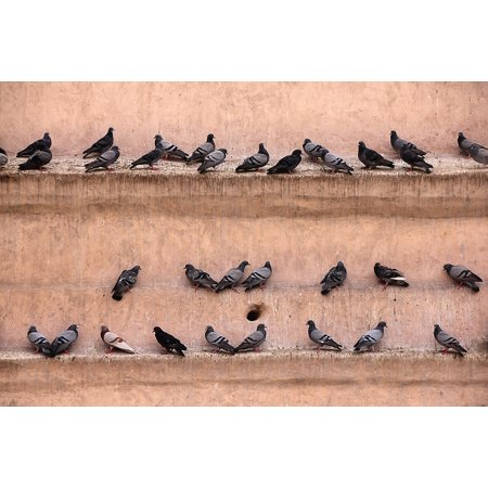 LAMINATED POSTER Pigeons Castle Fortress Bird Lines Wall Gathered Poster Print 24 x 36