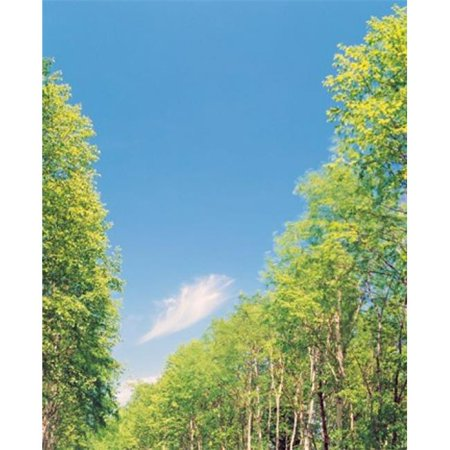 Panoramic Images Ppi126904 Trees Projected Against Blue Sky Poster Print By Panoramic Images   30 X 36