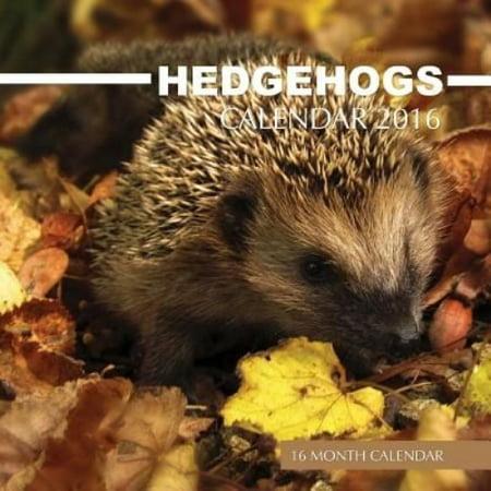 Hedgehogs Calendar 2016  16 Month Calendar
