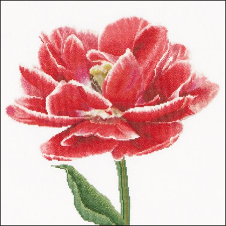 Edged Early Double Tulip On Aida Counted Cross Stitch Kit-13.25