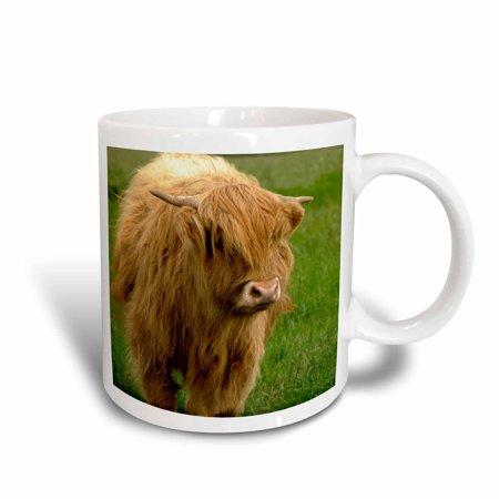 Scottish Farm - 3dRose Scotland, Highland cow, farm animal - EU36 CMI0128 - Cindy Miller Hopkins, Ceramic Mug, 15-ounce