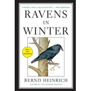 Ravens in Winter - eBook