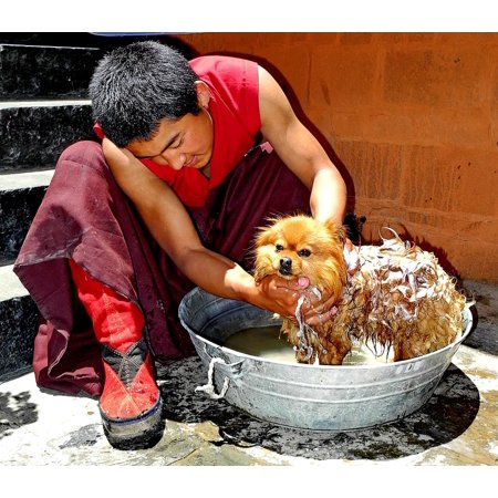 Laminated Poster Dog Soaping Soap Cute Bowl Tibet Washing Man Poster Print 24 X 36