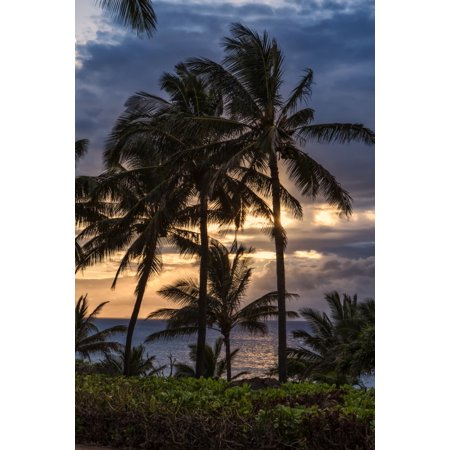 Silhouetted palm trees along the shoreline with the sun setting Molokai Hawaii United States of America Stretched Canvas - Scott Mead  Design Pics (12 x 19) ()