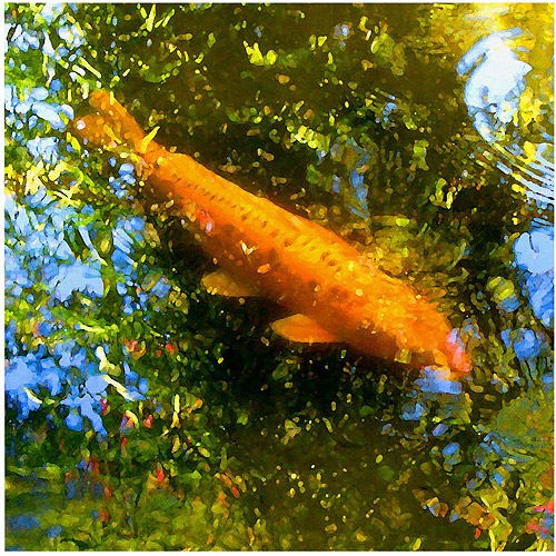"Trademark Fine Art ""Koi Fish"" Canvas Wall Art by Amy Vangsgard"