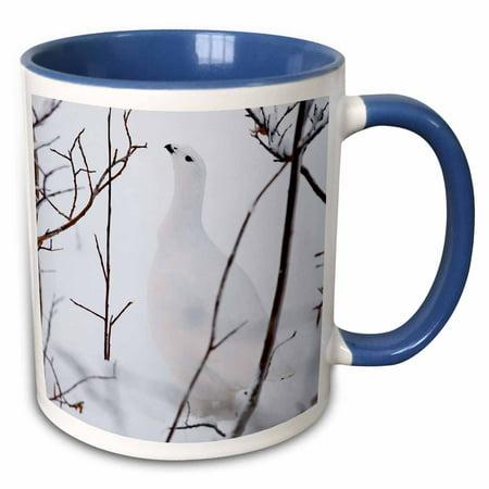 3dRose Canada, Manitoba, Churchill. Willow Ptarmigan.-CN03 RJA0010 - Rebecca Jackrel - Two Tone Blue Mug, (Churchill Made In Staffordshire England Blue Willow)