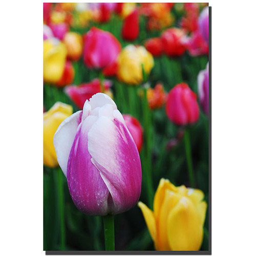 "Trademark Fine Art ""In Among the Tulips"" Canvas Art by Kurt Shaffer"