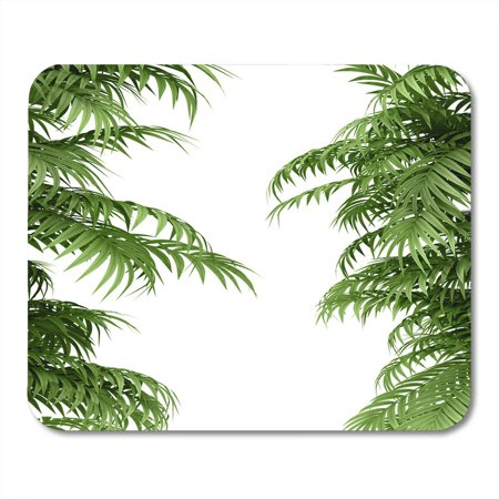 LADDKE Green Grove Tropical Plant Fernleaf Hedge Bamboo Branches Mousepad Mouse Pad Mouse Mat 9x10