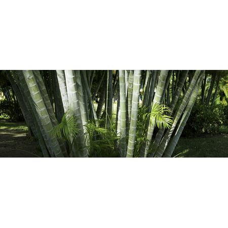Palm trees at Liberia Guanacaste Costa Rica Poster Print