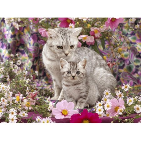 - Domestic Cat, British Shorthaired Silver Spotted Tabby with Her 8-Week Kitten Among Flowers Print Wall Art By Jane Burton