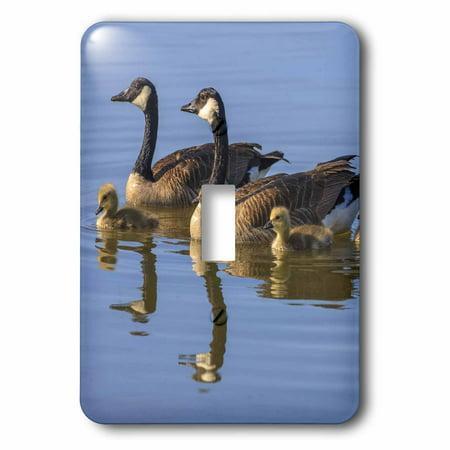 3dRose Canada Goose birds, San Francisco Bay, California USA - US05 TNO0064 - Tom Norring, 2 Plug Outlet (Outlet Store In San Francisco)