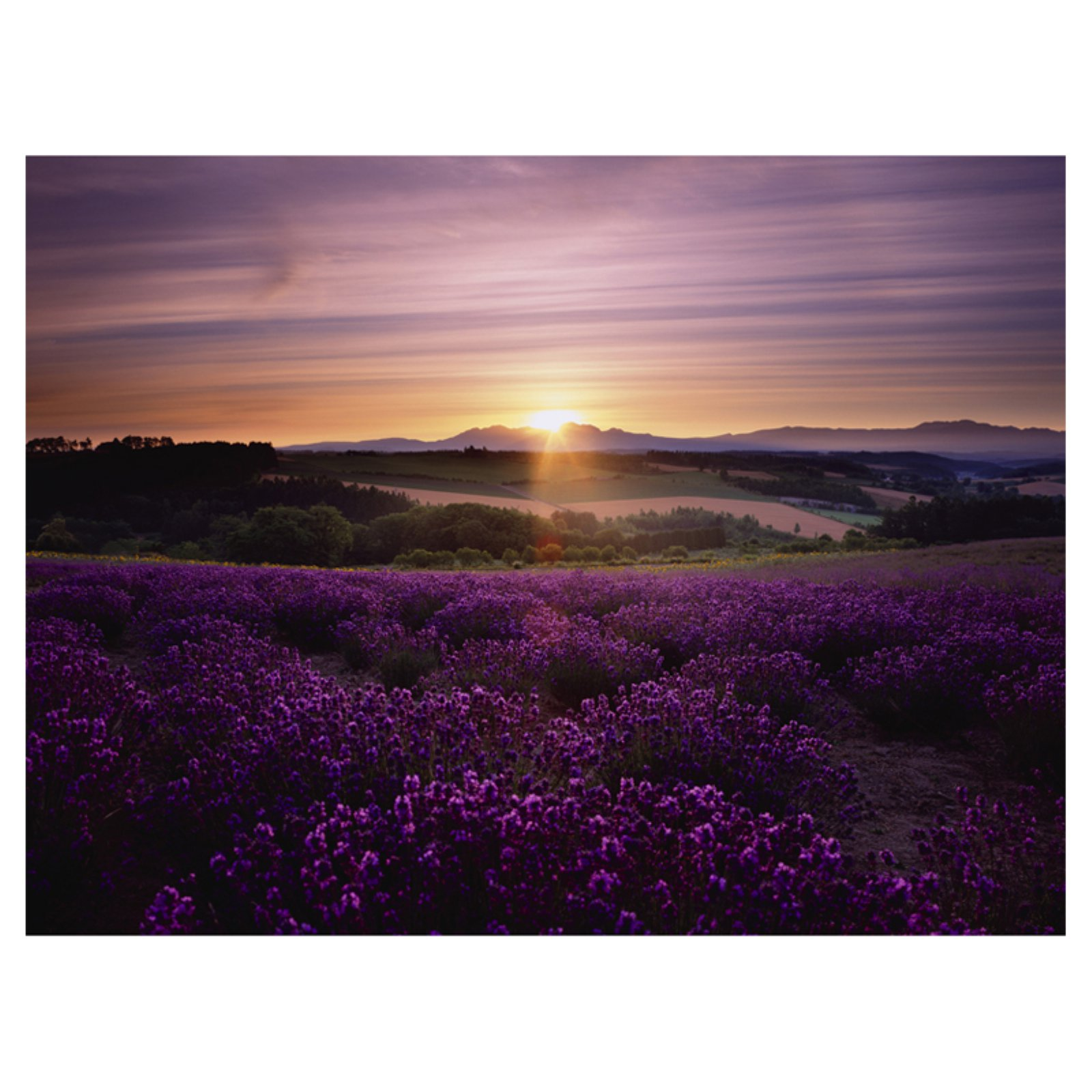 Lavender Sunset Canvas Wall Art - 32W x 24H in.