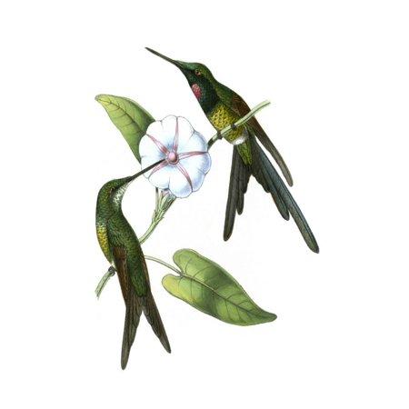 Hummingbird Outdoor Wall Art (Delicate Hummingbird III Print Wall Art By Vision)