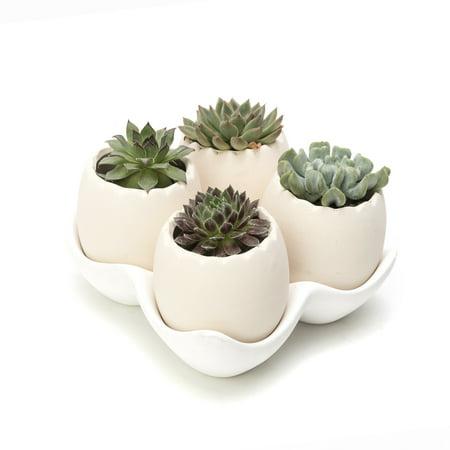 Egg Shell Design Decorative Medium Beige Ceramic Succulent Planter Pots with a Removable White Ceramic Saucer for Home Decor, Set of 4 (White) - Ceramic Eggs
