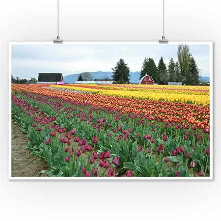 Multi Color Tulip Field - Lantern Press Photography (9x12 Art Print, Wall Decor Travel Poster)
