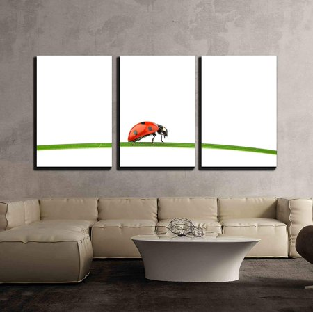 wall26 - 3 Piece Canvas Wall Art - Ladybug on Grass Isolated Macro - Modern Home Decor Stretched and Framed Ready to Hang - 24