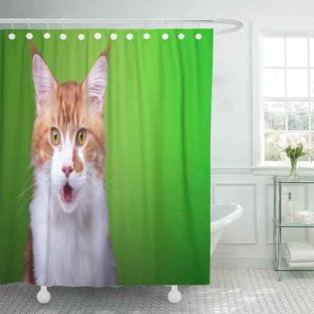 SUTTOM Blue Funny Cat Maine Coon is Isolatedon on Green Brown Shower Curtain 66x72 inch - image 1 de 1