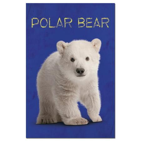 Polar Bear Invitations (Tree-Free Greetings Polar Baby Bear Boxed ECOnotes Blank Note)