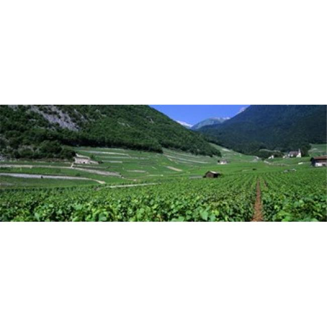 Panoramic Images PPI92199L High Angle View Of A Vineyard  Valais  Switzerland Poster Print by Panoramic Images - 36 x 12